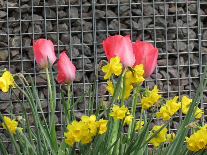 Schanskorven in de lente